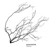 Black Motor: Branches
