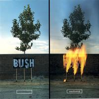 Bush: Swallowed