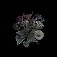 Nhor: Wildflowers